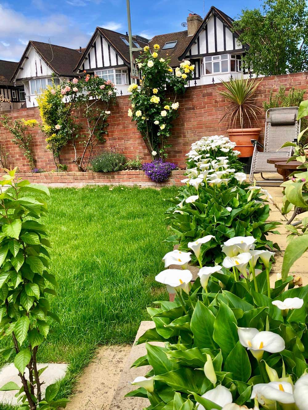 Home garden flowers